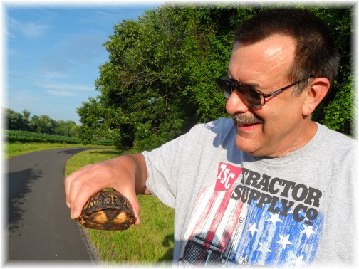 Turtle along Susquehanna River bike path