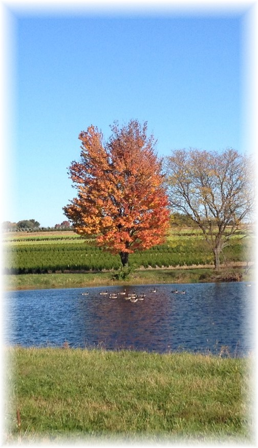 Pond along Rt 283, Lancaster County, PA 10/23/15