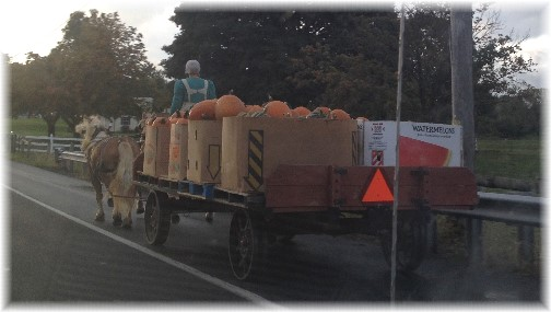 Horse-drawn wagon with pumpkins 10/14/14 (Click to enlarge)
