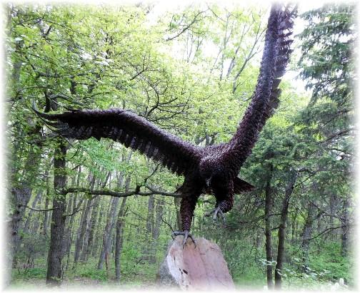 Hawk Mountain eagle