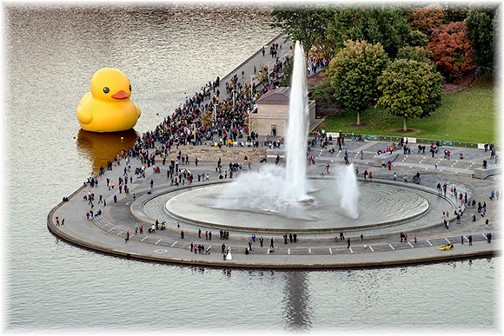 Pittsburgh three rivers duck (photo by Howard Blichfeldt)