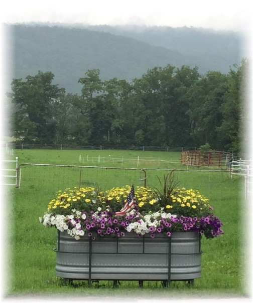 Stock tank flowers Allensville PA 7/7/15