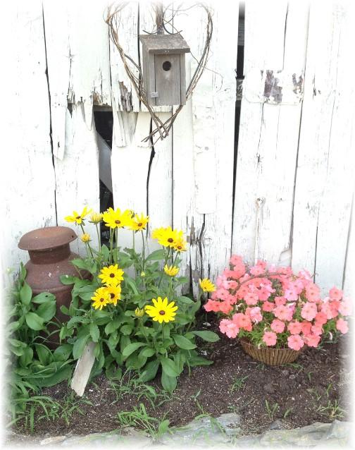 Flowers on barn side 7/12/15