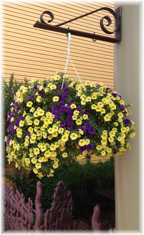 Hanging flowers on Main Street in Mount Joy 6/27/14