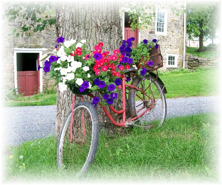Petunias on bike