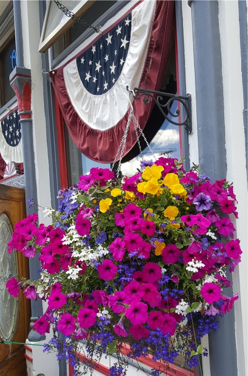 Petunias in Silverton, CO 7/8/16