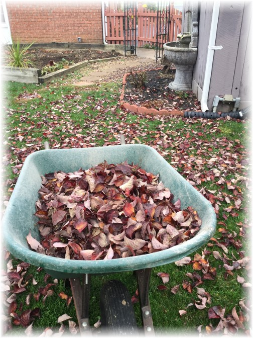 Backyard cleanup 11/5/15