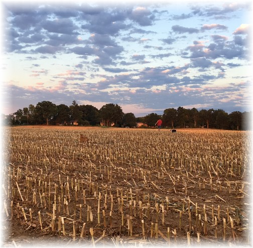 A walk across a recently harvested field 9/3/16