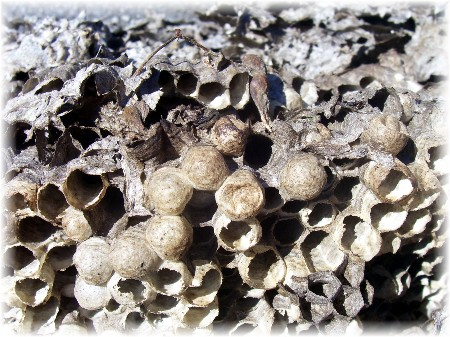 Inside a hornet's nest