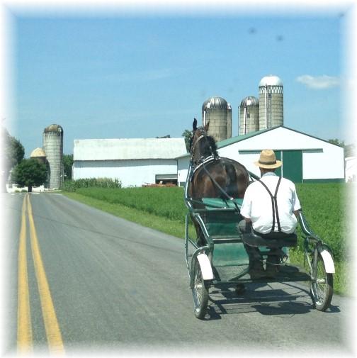 Mennonite man on horse-drawn cart 7/23/15