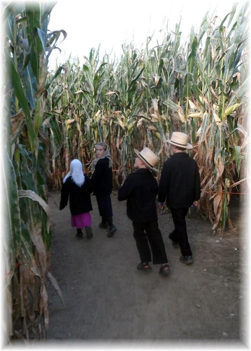 Walking through the Cherry Crest corn maze 9/14/13