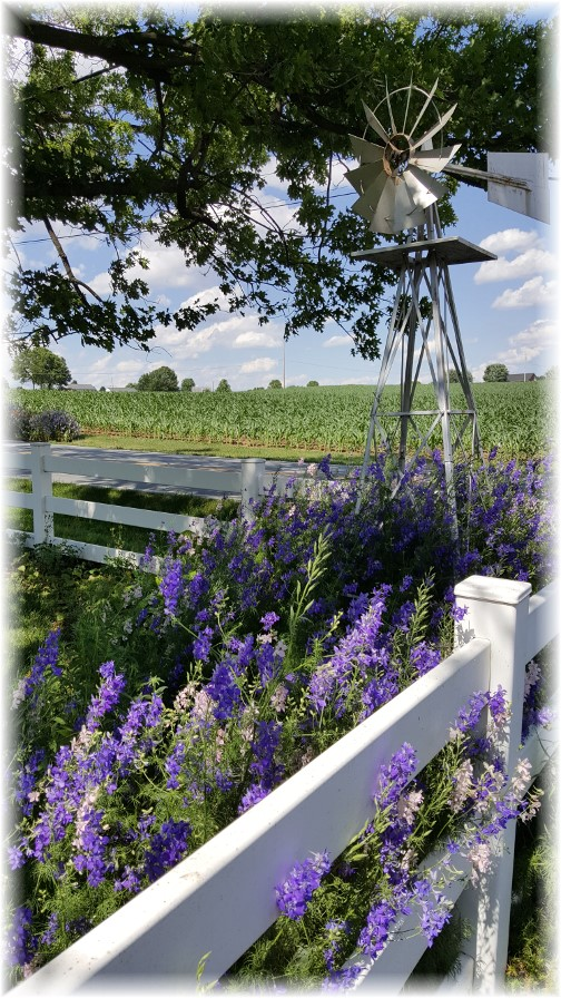 Hoffman Farm, Colebrook Road, Lancaster County, PA 6/20/17