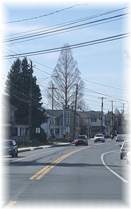 Main Street Mount Joy tree 4/9/17