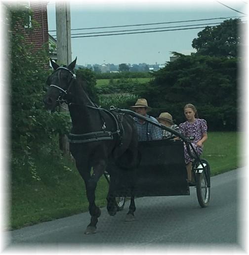 Old order Mennonite family transportation 7/27/17