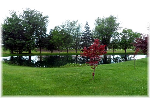 Strasburg Pike pond 6/19/13