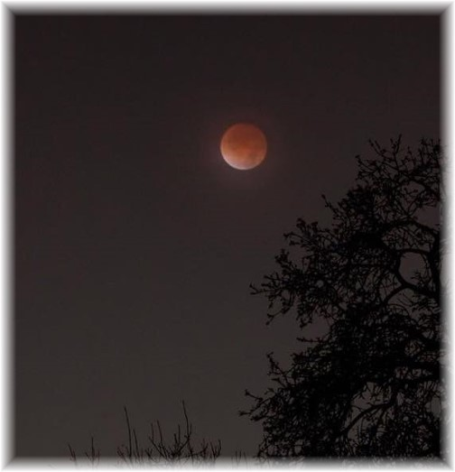 Blood moon 10/8/14 (Photo by Ester)