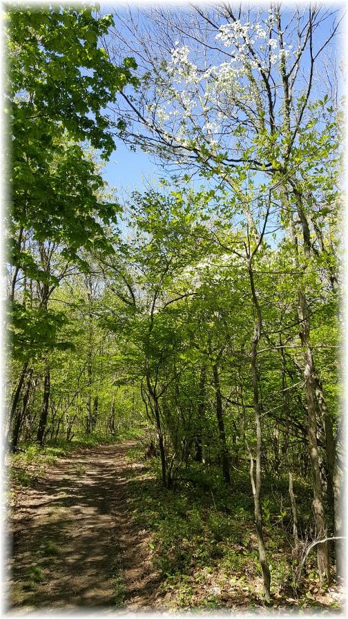 Appalachian Trail 5/9/17