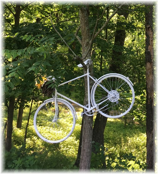 Columbia County bike in tree 6/28/17