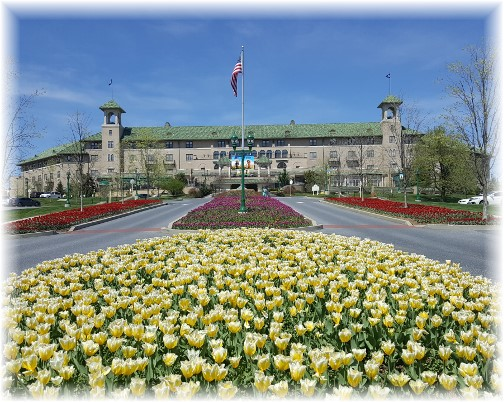 Hotel Hershey tulips (click to enlarge)