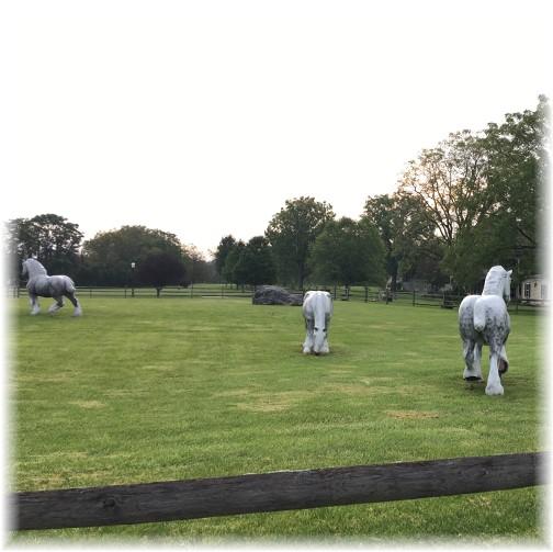 Tulpehocken Manor horses 9/12/17