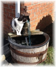 Mollie drinking from water pump