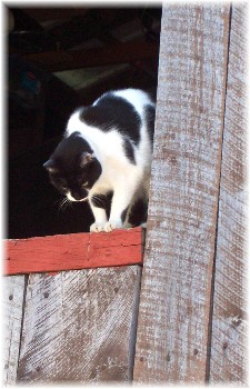 Dottie in barn door
