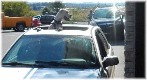 McDonalds drivethrough dog