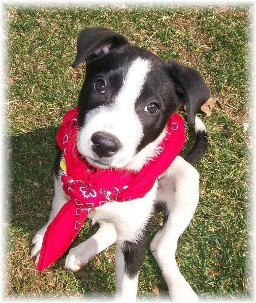 Mollie with red bandana 3/17/11
