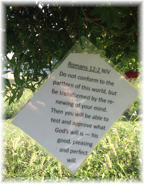 Romans 12:2 on Scripture card in Lebanon Trail Garden 8/28/15