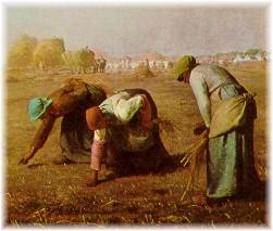 Women gleaning in field