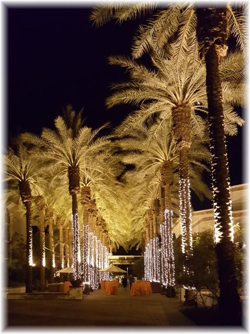Arizona palm trees at night 7/11/16
