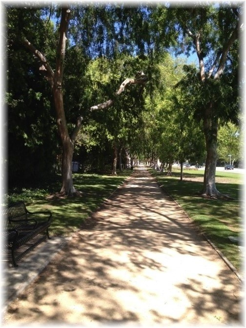Tree-lined walkway in Beverly Hills
