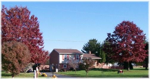 Weber front lawn oaks
