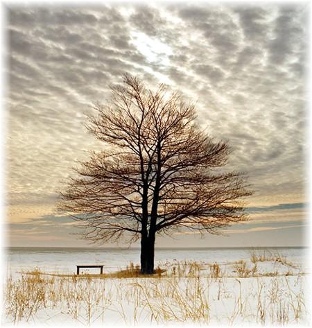 Tree in Michigan (photo by Howard Blichfeldt)