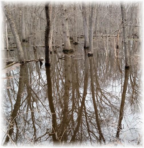 Reflecting trees (Photo by Georgia)