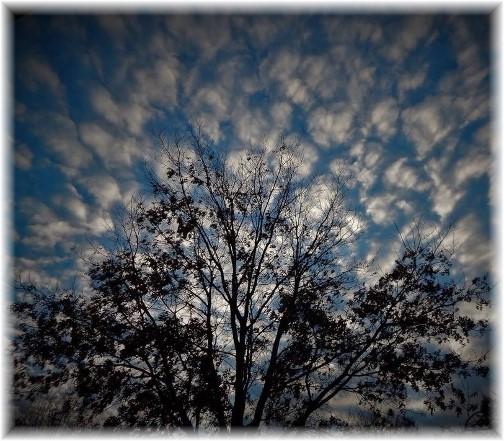 Winter sky 1/14/18 (Photo by Ester)
