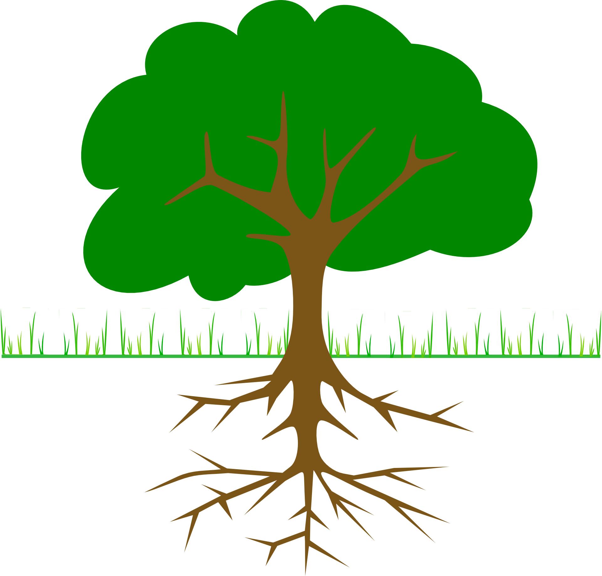 Cartoon Green plant,leaf & root vector