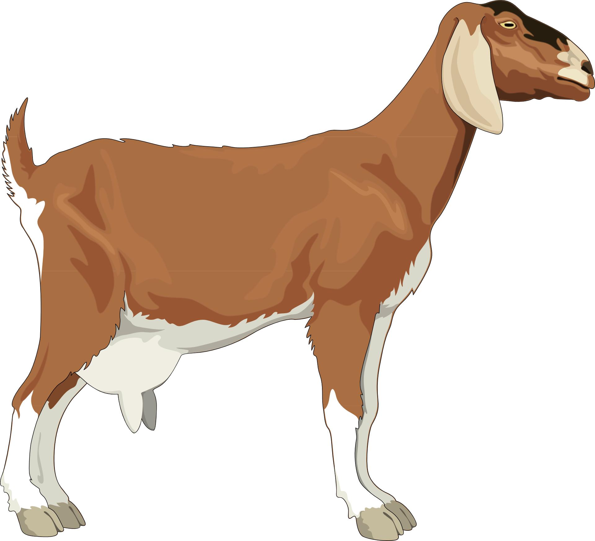 Cartoon animal,brown goat vector