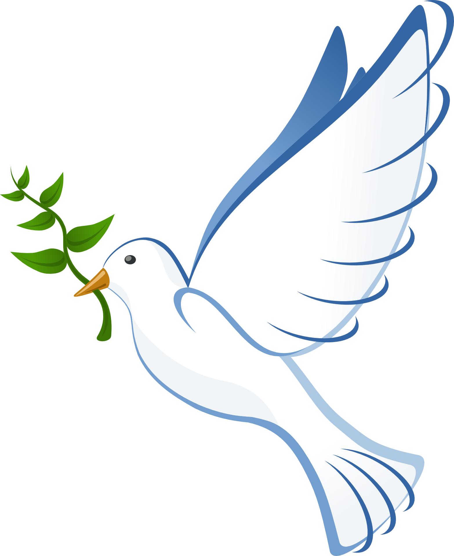 Cartoon bird - peace dove vector