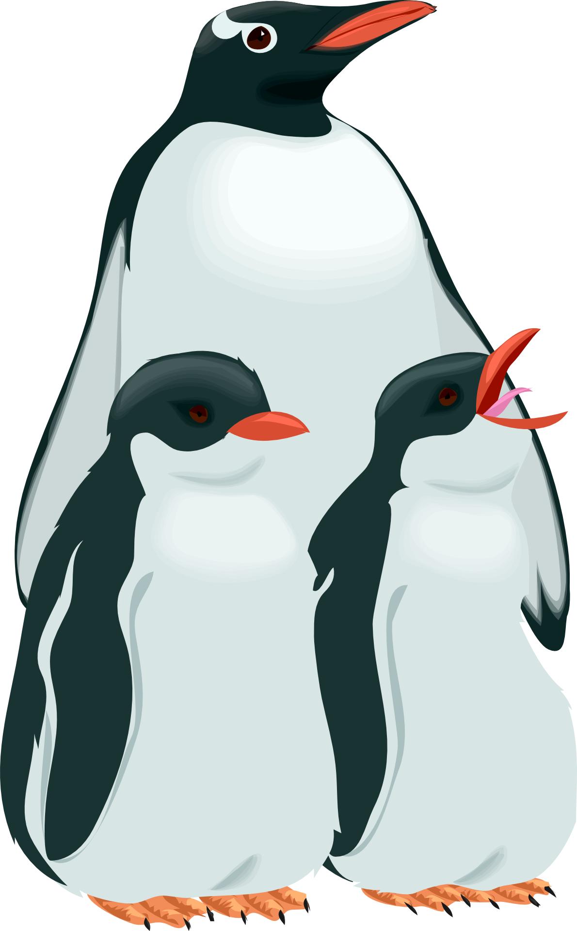 birds-penguin & birdling vector