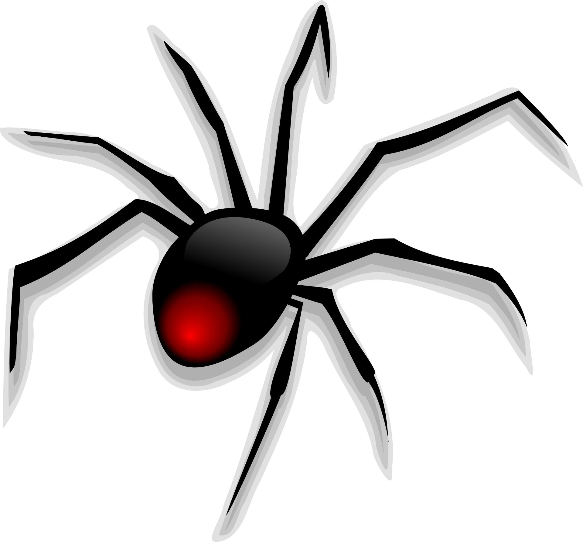 cartoon animal-black spider vector