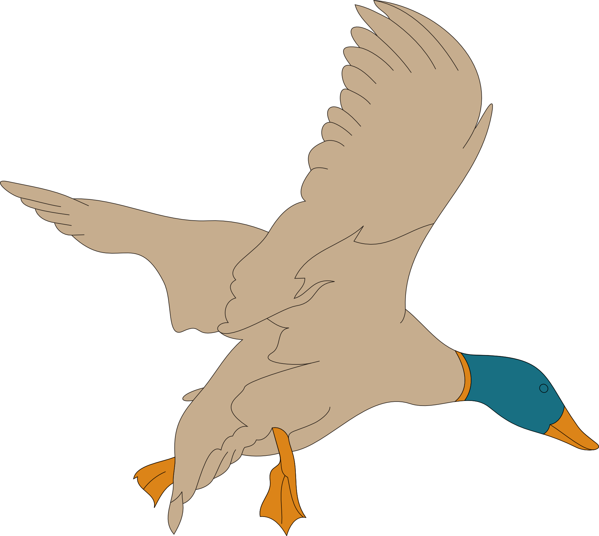 cartoon animal,brown bird,mallard vector