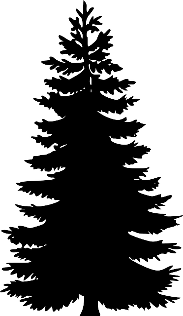 evergreen outline silhouette