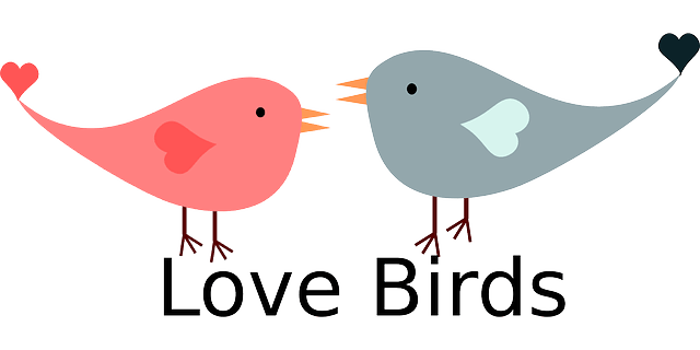 valentine love birds free vector