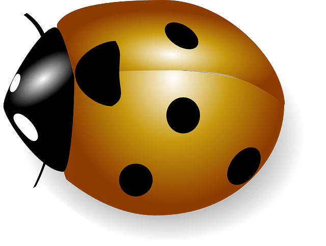 Seven-spotted ladybugs vector