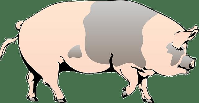 Pig & mud vector