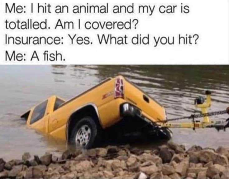 42 Funny Memes And Hilarious Sayings 6