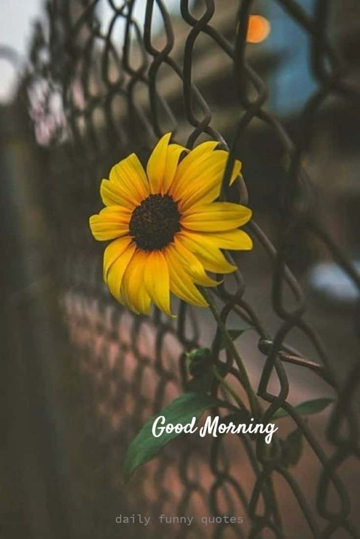 38 Inspirational Good Morning Quotes with Beautiful Images 8