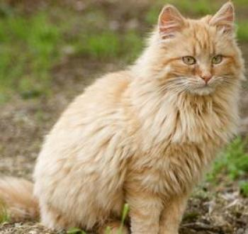 Freed: Cat With Head Trapped in Jar for 6 Days