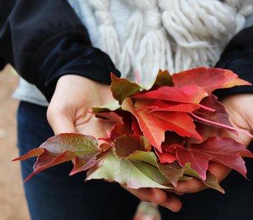 Thanksgiving Spotlight on Gratitude